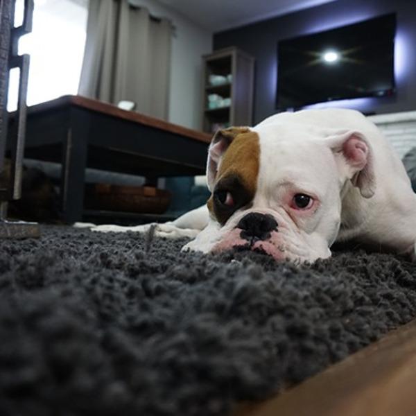 Wohnzimmer-Teppiche